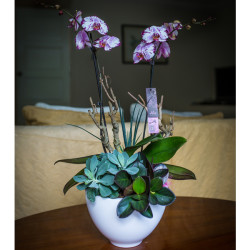 Deep Pink and White Orchid Arrangement with Succulents