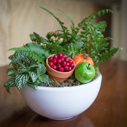 indoor arrangement fern, nettle, fruit