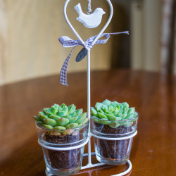 mini succulents heart pots