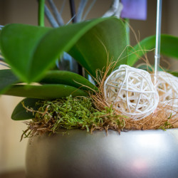 orchid pot decor bubbles