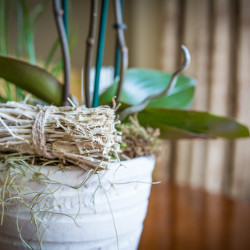 orchid pot decor wood