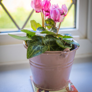 cyclamen metal pot 1